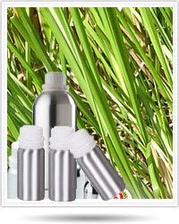 Vetiver Absolute